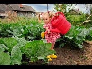 Иркутский городской клуб садоводов-опытников им. А. К. Томсона приглашает на курсы садоводов.