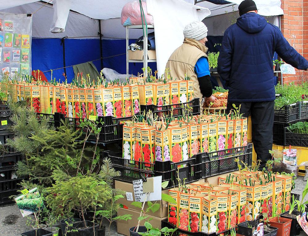 В Иркутске пройдут ярмарки-продажи рассады
