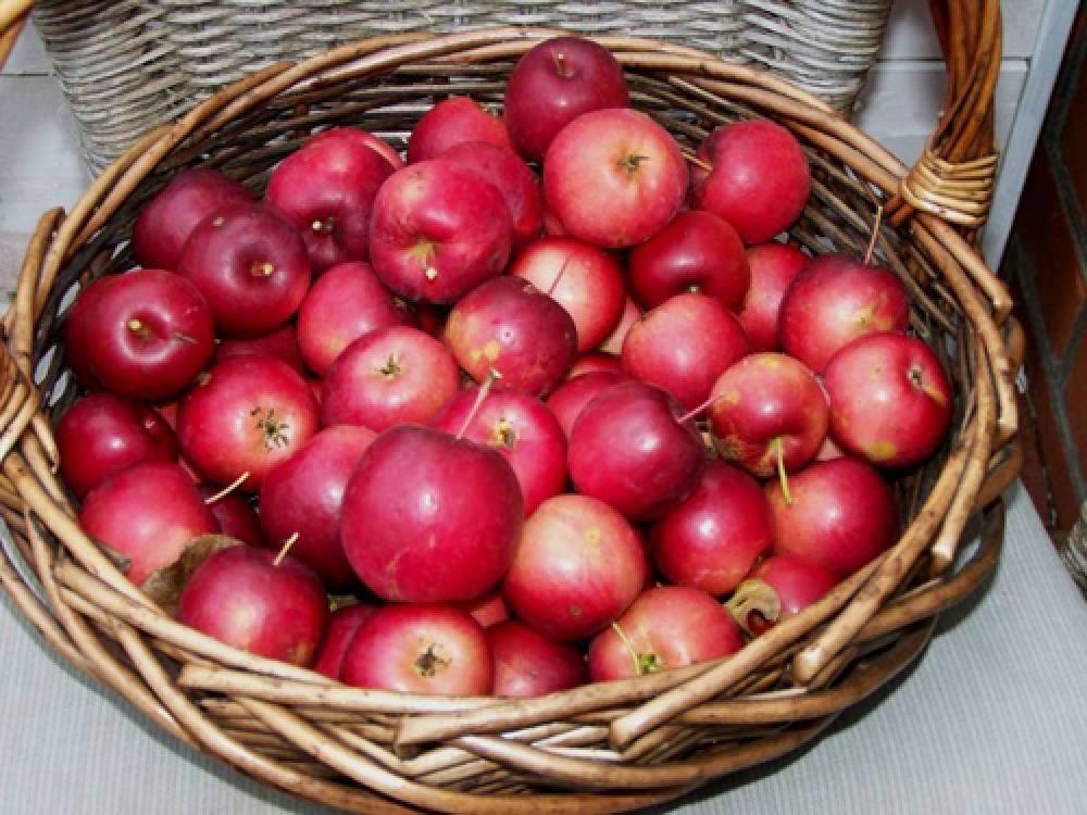 От ранеток - до крупноплодных яблонь