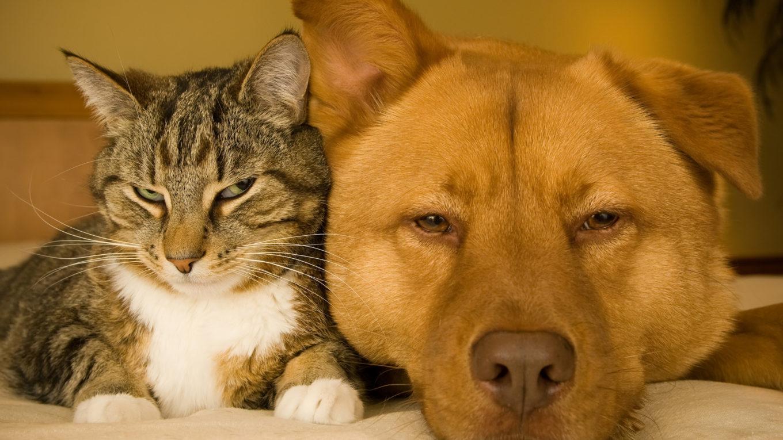 Отдел государственного надзора в области обращения с животными