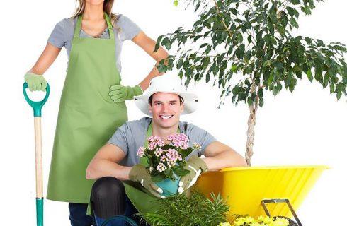 Вопросы к опытным садоводам