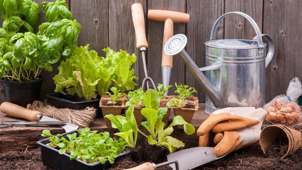 Союз садоводов сообщает о проведении курсов