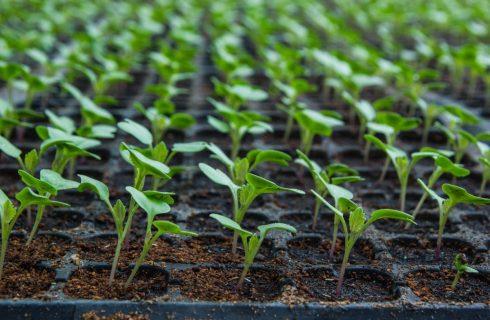 Выращивания рассады овощей