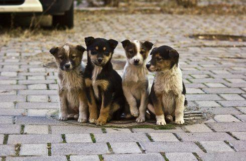 Письмо по безнадзорным животным